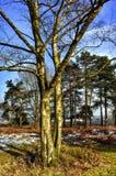 Heathland Royalty Free Stock Images