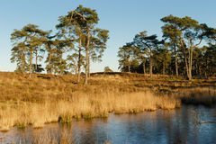 Heathland with lake Royalty Free Stock Photos