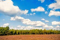 Heathland med gemensam ljung för blomning fotografering för bildbyråer