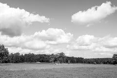 Heathland med gemensam ljung för blomning, naturlig bakgrund royaltyfri bild