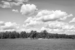 Heathland med gemensam ljung för blomning, naturlig bakgrund arkivbild