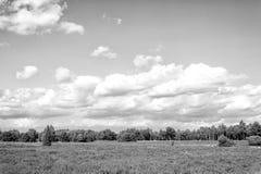 Heathland med gemensam ljung för blomning, naturlig bakgrund arkivfoton