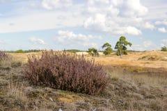 Heathland in National Park de Hoge Veluwe Stock Image