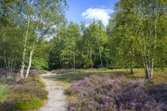 Heathland in National Park Maasduinen Stock Photos