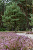 Heathland in northern Germany Stock Images