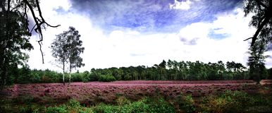 Heathland panorama Stock Images