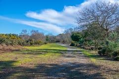 Heathland path in winter sun. A path through heathland in winter sunshine with gorse and trees Stock Photo