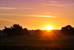 Heathland sunrise Royalty Free Stock Photography