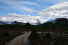 Heathland track on the Cairngorms national park. Royalty Free Stock Image