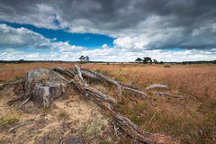 Heathland with tree trunk on the foreground with a dark sky. Stock Images