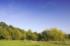 heathland treeline Zdjęcia Stock