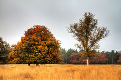 Heathland trees in autumn Royalty Free Stock Photography