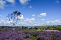 Cannock Chase Area of Outstanding Natural Beauty in Staffordshire. Heathlands in the Cannock Chase Area of Outstanding Natural Beauty in Staffordshire, England Stock Photo