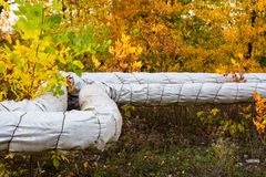Heating pipes in the autumn forest Stock Photo