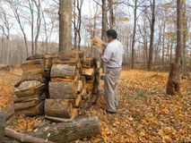 Heating with Wood. Homeowner removes wood for burning. Soaring energy prices make this a nice reducer of energy bills royalty free stock photography