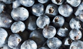Heatlhy Blueberries. Fresh organic blue berries in high reselution. Can be used as background.Blueberries are flowering plants of the genus Vaccinium royalty free stock photo