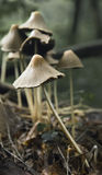 Heats. Fragile mushrooms in the afternoon Royalty Free Stock Photos