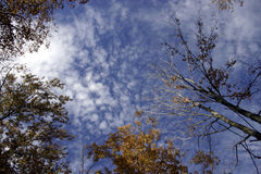 Heaven Above. Beautiful blue sky with trees reaching toward the heavens Stock Image