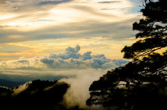 Heaven. Cloud , sunset, misty mountain and pine tree Royalty Free Stock Images
