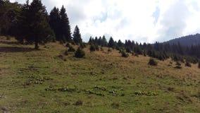 Heaven on Earth. Castelul Cantacuzino Romania Stock Image