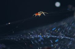 Between Heaven and Earth. Spider moves along the web, and at the bottom under the influence of a gentle wind, glare Wide Web has created a different colors. This Royalty Free Stock Photos