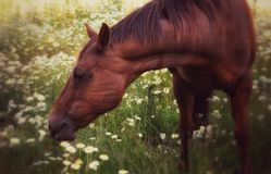Heaven in a horse field Royalty Free Stock Photo