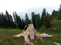The Heaven Path. I took this picture will doing tracking in Nathia Gali Pakistan stock image