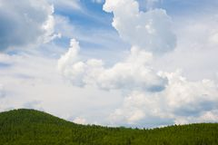 Heaven and trees Stock Photography