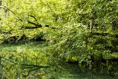 Heavenly green landscape with a green pond in Plitvice Lakes NP Royalty Free Stock Images