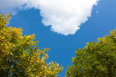 Heavenly love. Heart-shaped sky with leaves and cloud Stock Photo