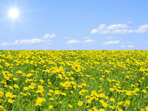 Heavenly meadow Stock Photography