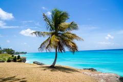 Heavenly palm tree beach Royalty Free Stock Photo