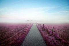 Heavenly path thru a violet colored field towards a misty forest. Photograph of a misty field with a clear path going towards a forest. The field is colored pink Royalty Free Stock Photography