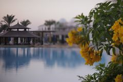 Heavenly place - relaxing by the pool with flowers on a weekend holiday in Egypt.  stock image