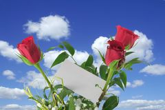 Heavenly roses  Royalty Free Stock Photography