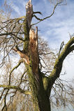 Heavily damaged tree Stock Photos