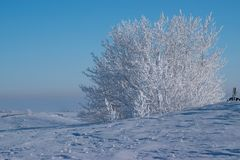 Heavily Frosted Trees against a Robin Egg Blue Sky. Heavily Frosted Trees against a  Blue Sky Stock Image