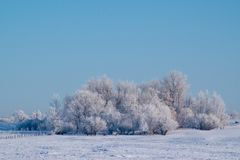 Heavily Frosted Trees against a Robin Egg Blue Sky. Heavily Frosted Trees against a Blue Sky Royalty Free Stock Photos