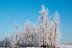 Heavily Frosted Trees against a Robin Egg Blue Sky. Heavily Frosted Trees against a Blue Sky Royalty Free Stock Photography