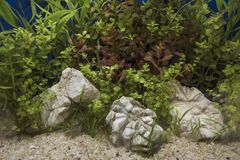 Planted Freshwater Aquarium. Heavily planted freshwater aquarium on Natural background Stock Photos