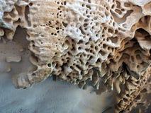 Honeycomb Sandstone Patterns, Bondi Beach, Australia Stock Images