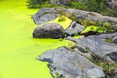 Heavy algae bloom Royalty Free Stock Photography