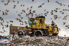 Landfill Dozer. A heavy compactor bulldozer manipulates the rubbish at a landfill site and seagulls, carrion and raptors all seize the value of food in this Royalty Free Stock Images