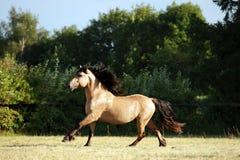 Heavy draft horse at farm vacation in summer Royalty Free Stock Photo