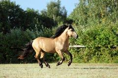 Heavy draft horse at farm vacation in summer Stock Photo