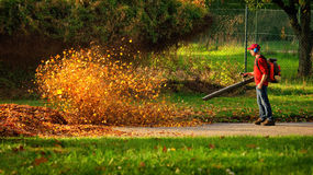 Heavy duty leaf blower in action. Man operating a heavy duty leaf blower: the leaves are being swirled up and glow in the pleasant sunlight stock image