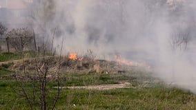 Heavy fire in a field stock video