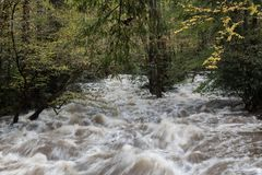 Heavy flooding on a river in the Great Smoky Mountains in autumn. Horizontal aspect Royalty Free Stock Photography
