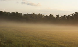 Heavy fog over agriculture landscape in Sweden Royalty Free Stock Photography