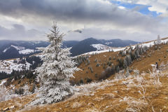 Heavy frost in the mountains Royalty Free Stock Images